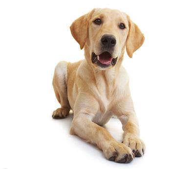Was Tun Wenn Der Hund Stinkt